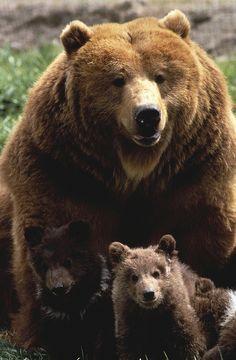 ♂ Wild life photography bear family #bear #family #animal