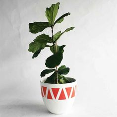 How to Add Greenery to a Space - Cupcakes