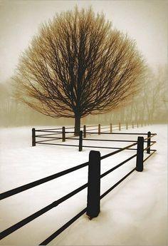 Winter Szenen, Winter Trees, Art Encadrée, Foto Picture, Photo Tree, All Nature, Human Nature, Nature Images, Snow Scenes