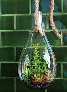 Obviously green is our favourite colour. Loving the way our succulent terrarium is hung in front of these bright jade subway tiles 💚 #rtcfloral #terrarium #succulents #subwaytiles #succulent #hangingplants