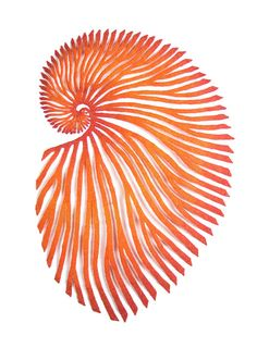 The Artwork of Meredith Woolnough. Red Paper Nautilus (2016) by Meredith Woolnough, embroidery thread and pins on paper.