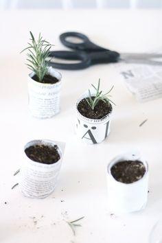 Tuinieren in mini vorm, wat een mooie manier om groen in je huis te brengen!