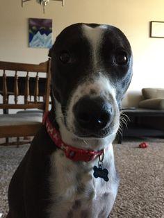 """""""Mom where did my ears go?"""" http://ift.tt/2rHm351"""