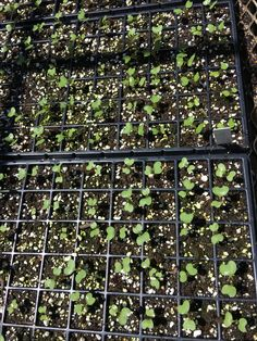 Seedlings Seed Production, City Photo, Seeds