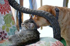 Ellis Farms CBR - Zoe & stray kitten. 1/14 Chesapeake Bay, Cbr, Farms, Kitten, Animals, Cute Kittens, Homesteads, Kitty, Animales