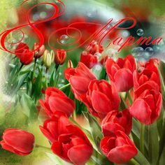 8th Of March, Tulips, Cute Pictures, Congratulations, Happy Birthday, Animation, Spring, Holiday, Plants