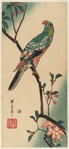 Japanese Parrot Art