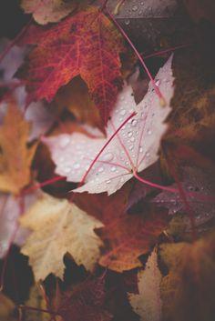 Autumn leaves   My love