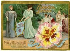 """Beautifully-gowned women and a lovely New Climbing Nasturtium grace the back cover of Carrie Lippincott's 1898 catalog. Carrie Lippincott, the self-proclaimed """"pioneer seedswoman"""" and """"first woman in the flower seed industry"""" established her mail-order flower seed business in Minneapolis in 1891. She cultivated women customers by sending out smaller 5 inch by 7 inch catalogs with colorful covers during her early years of business."""
