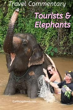 The Thailand elephant debate about their treatment is a hot-button issue among Western tourists. We lived at an ethical camp, and offer this commentary. Elephant Camp, Thailand Elephants, Tourist Sites, Like A Local, Gentle Giant, Family Traditions, Culture Travel, The Locals, Camping