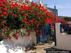 Geraniums extend a colourful welcome at the entrance to a private home on Ios Gemini Weekly Horoscope, Red Geraniums, Island Park, Greece Islands, Greece Travel, Santorini, Entrance, Ios, Sidewalk