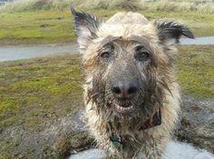Lynn Rhodes' dog Tabatha #PreciousPet of #April #PoM