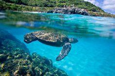 North Shore , Oahu , Hawaii