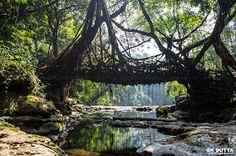 IMAGINARY-GK Dutta Photography: THE LIVING ROOT BRIDGE OF MEGHALAYA!