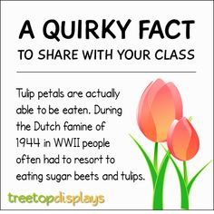 Posted to FB A quirky fact about tulips to share with your class - from Treetop Displays. Visit our TpT store for printable resources by clicking on the provided links. Designed by teachers for Pre-Kindergarten to Grade. Fun Facts For Kids, Fun Facts About Animals, Animal Facts, Jokes For Kids, Wtf Fun Facts, Random Facts, Fun Learning, Teaching Kids, Learning Activities