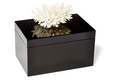 black box with fern coral at one kings lane
