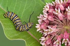 Need help attracting butterflies to your yard? National Wildlife Federation expert David Mizejewski unveils butterfly host plants you want in your garden.