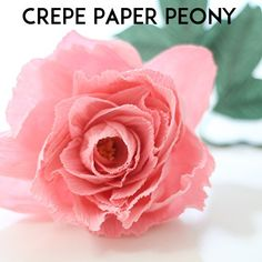 Learn how to create a crepe paper peony with my updated video tutorial! Large Paper Flowers, Tissue Paper Flowers, Paper Flower Backdrop, Fake Flowers, Diy Flowers, Fabric Flowers, Paper Succulents, Strawberry Roses, Paper Peonies