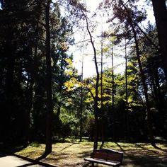 【minini55s】さんのInstagramをピンしています。 《も り の な か  #京都 #植物園 #針葉樹 #森  #kyoto #botanical #garden  #forest #conifer #japan》