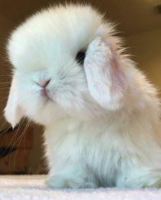 Cute Baby Bunnies, Cute Baby Animals, Animals And Pets, Cute Babies, Bunny Bunny, Strange Animals, Cute Bunny Pictures, Rabbit Pictures, Funny Rabbit