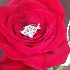 Check out Beth's gorgeous pear diamond halo engagement ring! Love the criss cross split shank! Pear Diamond Rings, Halo Diamond Engagement Ring, Engagement Rings, Wedding Dreams, Dream Wedding, Wedding Day, Split Shank, Pear Shaped, Criss Cross