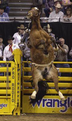 FLASHBACK.  Saddle Bronc Riding - Wrangler National Finals Rodeo - Las Vegas, Nevada.