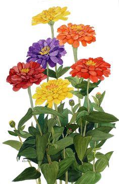 Multicolor Zinnia gruppo riproduzione dell'acquerello di Wanda Zuchowski-Schick di wandazuchowskischick su Etsy https://www.etsy.com/it/listing/214532826/multicolor-zinnia-gruppo-riproduzione