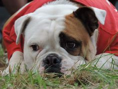 Hunde Foto: Anne und Hugo - Schön endspannen Hier Dein Bild hochladen: http://ichliebehunde.com/hund-des-tages  #hund #hunde #hundebild #hundebilder #dog #dogs #dogfun  #dogpic #dogpictures