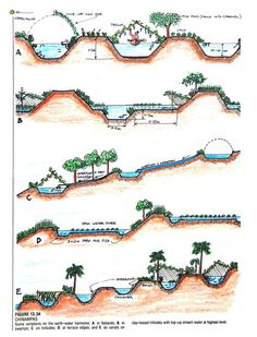 How permaculture sees and works with water water harvest - Decentralized Natural Water Management Systems Permaculture Design, Plan Potager Permaculture, Forest Garden, Rain Garden, Hydroponic Gardening, Organic Gardening, Organic Farming, Vegetable Gardening, Aquaponics System