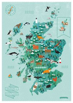 A2 Wildlife Map of Scotland print by finchandrobin on Etsy