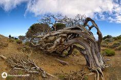 El Hierro - Rincones de Canarias