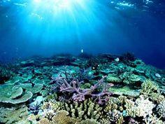 Australia's Great Wonder - The Great Barrier Reef K History Unit 1.