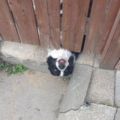 10 Reasons Border Collies Are The Worst Breed EVER