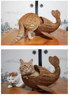where did the other cat come from