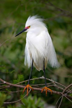 Snowy Egret by Mark Jones on 500px