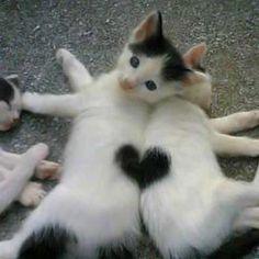 Grappige afbeeldingen: Grappige afbeeldingen; Katten en liefde