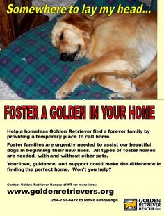 ADOPT and/or FOSTER with Golden Retriever Rescue of North Texas   Or find a rescue in your area! Lovable pets of all kinds are waiting for their forever homes across the country.