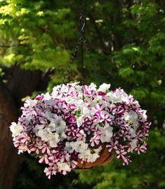 deco brise-vue balcon fleurs-petunias-violets