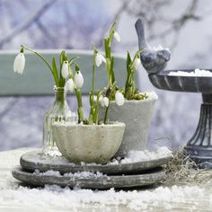 Gardening in January - 5 tips for gardening lovers during winter time.I know they are snow drops lol Winter Plants, Winter Flowers, Winter Garden, Spring Flowers, Spring Garden, Bulb Flowers, Flower Pots, Winter Beauty, Arte Floral