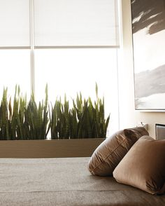 The sansevieria (mother-in-law's tongue) in my bedroom window is a perfect…
