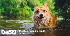 Every dog has his day.  Here in Austin, that day may as well be every day of the year. Whether you're aware of it or not, we live in one of the most dog-obsessed cities around. We love our furry amigos, which means that there are a whole lot of places tha