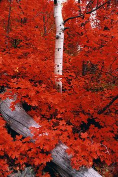 I love fall leaves. The colors are entirely beautiful.