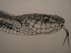 real drawings of reptiles image search results Snake Drawing, Snake Art, Animal Drawings, Pencil Drawings, Reptiles, Scratchboard Art, Nordic Tattoo, Japan Tattoo, Painting Tattoo