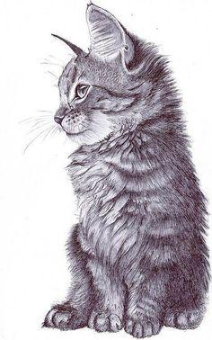 Arte, desenho, felino, gatos