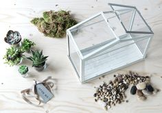 An IKEA SOCKER greenhouse, moss, succulents, pebbles, and a ribbon with a gift tag sit neatly arranged on a wood surface.