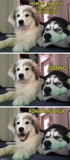 Just a little husky? Check out this list of the best exercises for the Siberian - Funny Husky Meme - Funny Husky Quote - The post Just a little husky? Check out this list of the best exercises for the Siberian appeared first on Gag Dad. Dog Jokes, Funny Dog Memes, Funny Animal Memes, Cute Funny Animals, Funny Animal Pictures, Memes Humor, Funny Photos, Funny Images, Funny Dogs