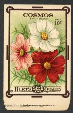 COSMOS, Fancy Mixed, Antique Seed Packet