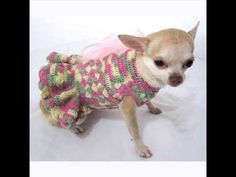 How to crochet dog sweater - Bijou's Candy Stripe Coat View of the finished Coat #1 - YouTube