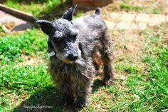 Happy Hounds Pet Sitting and Dog Walking in Burleson TX - Google+ www.happyhoundspetsitters.com
