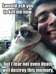 Grumpy cat, grumpy cat meme, grumpy cat quotes, funny grumpy cat quotes, grumpy cat jokes …For the funniest quotes and hilarious pictures visit www. Grumpy Cat Quotes, Funny Grumpy Cat Memes, Cat Jokes, Funny Animal Memes, Funny Animal Pictures, Funny Animals, Cute Animals, Grumpy Kitty, Grump Cat